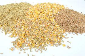 Unterschiedliche Saatgüter Mais, Weizen, Gerste